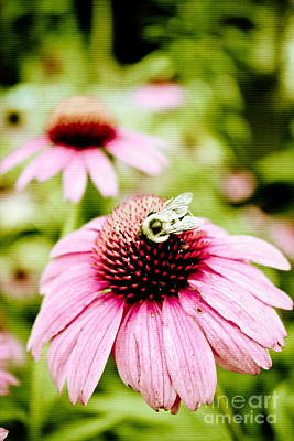 Photograph - Honey Bee by Colleen Kammerer