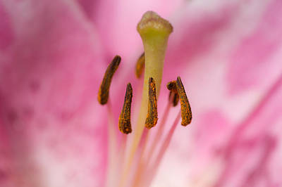 Floral Loveliness Photograph - Honey-bee Eye View - Featured 3 by Alexander Senin
