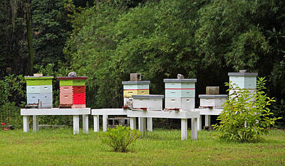 Honey Bee Hives Original