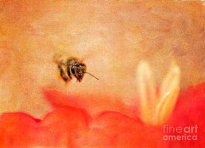 Photograph - Honey Bee In Flight by Marianne Jensen