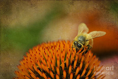 Honey Bee On Flower Art Print by Dan Friend