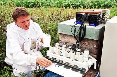 Microchip Photograph - Honey Bee Pesticide Research by Philippe Psaila