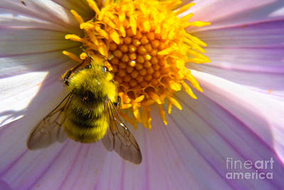 Photograph - Honey Bee by Tikvah's Hope