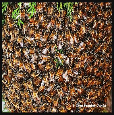 Art Print featuring the photograph Honey Bee Swarm by Tom Janca