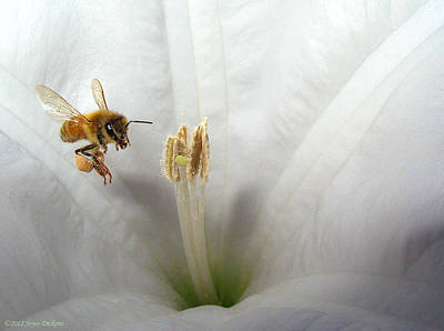 Numbers Plus Photograph - Honey Bee Up Close And Personal by Joyce Dickens