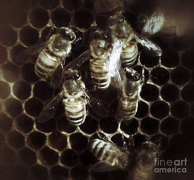 Photograph - Honey Bees by Chris Scroggins