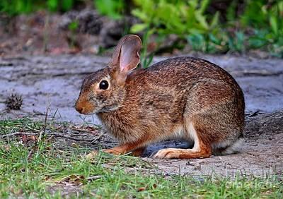 Photograph - Honey Bunny by Kathy Baccari