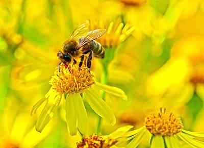 Photograph - Honey Colours by Steven Poulton