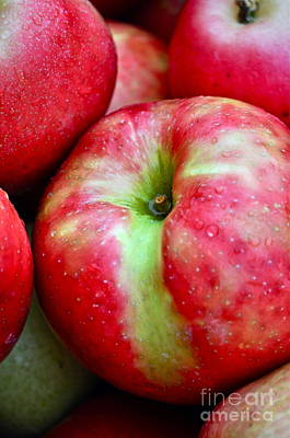 Apple Photograph - Honey Crisp Apples by Gwyn Newcombe