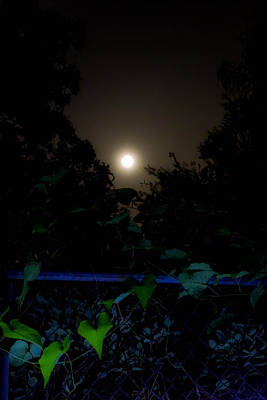 Photograph - Honey Moon In New Orleans On Friday The 13th by Louis Maistros