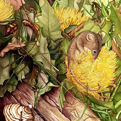 Honey Possum In Dryandra Original by Suzannah Alexander