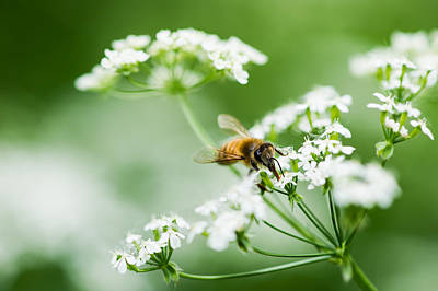 Honey Season Art Print