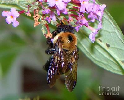 Abstract Animalia - Honey Suckle by Paul Smith