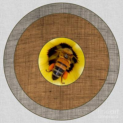 Photograph - Honey Target by Darla Wood