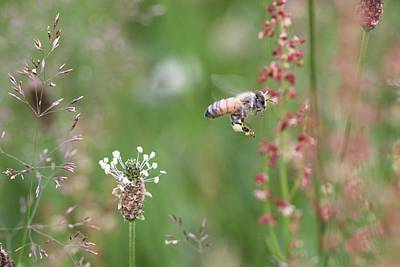 Honeybee Flying In A Meadow Art Print
