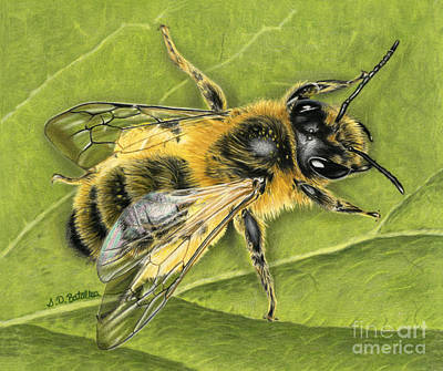 Hyper-realism Drawing - Honeybee On Leaf by Sarah Batalka