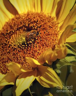Honeybee On Sunflower Art Print by Sharon Talson