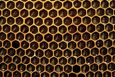Bee Hive Photograph - Honeycomb And Honey by Mauro Fermariello