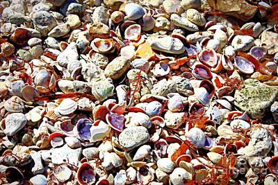 Honeymoon Island Shells - Digital Art Art Print by Carol Groenen