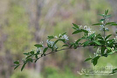 Photograph - Honeysuckle Bush 20120419_158a by Tina Hopkins