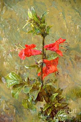 Photograph - Honeysuckle- Classical by Darla Wood