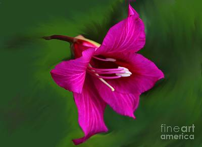 Photograph - Hong Kong Orchid by Elizabeth Winter