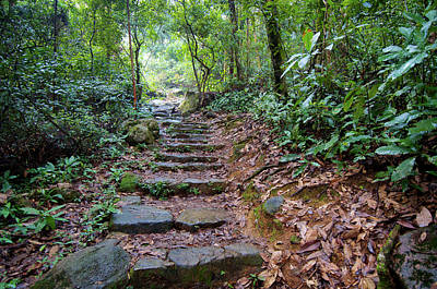 Po Photograph - Hong Kong, Tai Po Kau Nature Park by Richard Wright