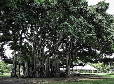 Honolulu Banyan Tree Art Print by Daniel Hagerman