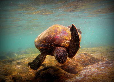 Honu Photograph - Honu At Kahaluu by Lori Seaman