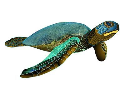 Green Sea Turtle Drawing - Honu Green Sea Turtle by Fred Croydon
