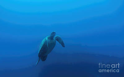 Photograph - Honu by Jon Burch Photography