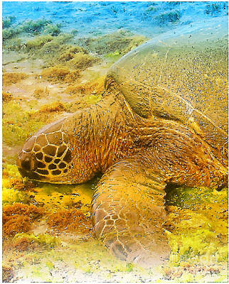 Haleiwa Digital Art - Honu  Sea Turtle by Dorlea Ho