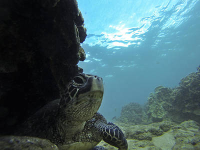 Hawaiian Green Sea Turtle Photograph - Honu Territory by Brad Scott