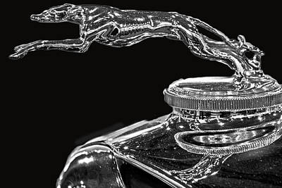 Greyhound Photograph - Hood Ornament by Tom Gari Gallery-Three-Photography