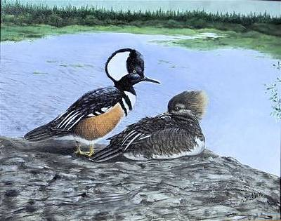 Painting - Hoodend Mergansers by Olga Wing
