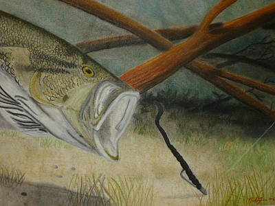 Largemouth Drawing - Hooked by Nicole Grev