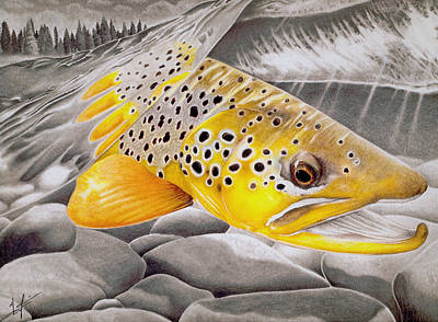 Brown Trout Drawing - Hookjaw On The Move by Nick Laferriere