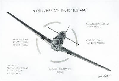 P51 Drawing - Hoopoe With Specs by Matthew O'Neil
