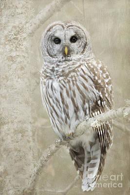 Hoot Hoot Hoot  Art Print by Beve Brown-Clark Photography
