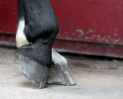 Equine Photograph - Hooves by Lisa Phillips
