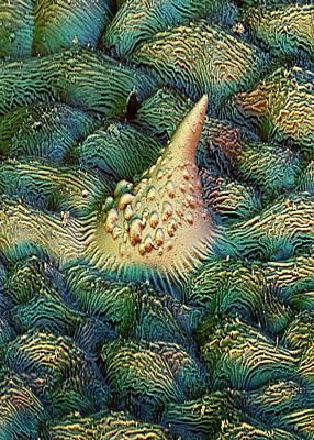 Hop Leaf Trichome Art Print by Stefan Diller