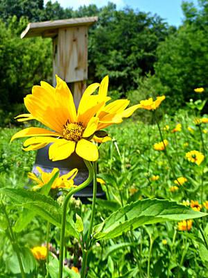 Sanctuary Photograph - Hope Blooms by Soul Full Sanctuary Photography