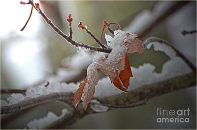 Photograph - Hope Springs Eternal by Debbie Portwood