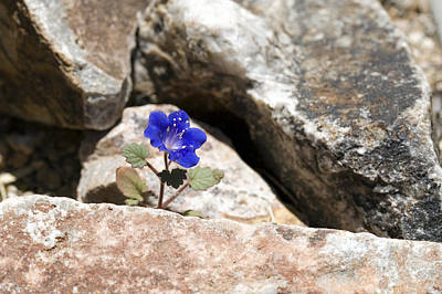 Wildflowers Photograph - Hope by Susan Degginger