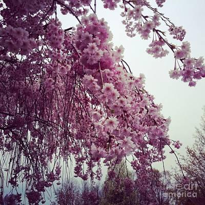 Soap Suds - Hopeful Spring by Amanda Barcon