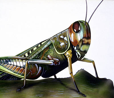 Grasshopper Drawing - Hopper by Lonnie C Tapia