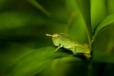 Grasshopper Wall Art - Photograph - Hopper by Shane Holsclaw