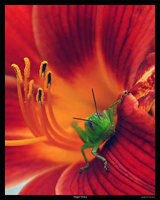 Photograph - Hopper Vortex by Gene Tatroe