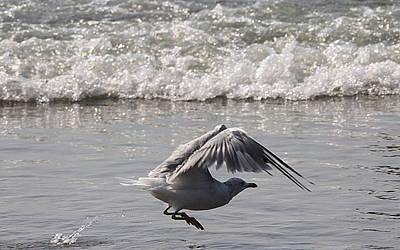 Photograph - Hoppin' Gull by Mustafa Abdullah