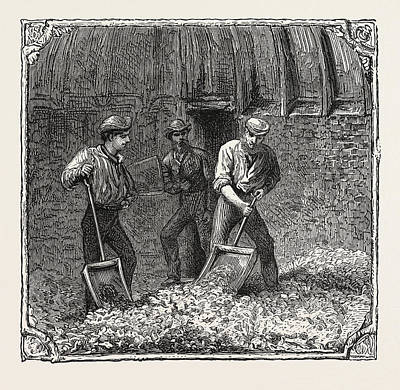 Hop Drawing - Hops And Hop Pickers, In A Kentish Hop Garden, Kent by English School